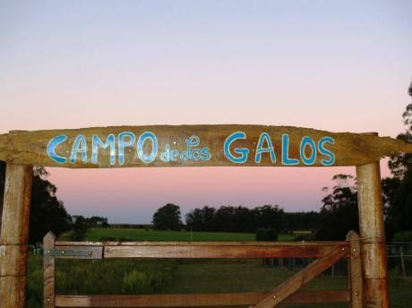 Campo De Los Galos , Habitaciones De Huespedes